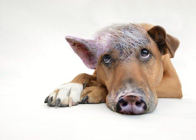 Innerer Scheweinehund